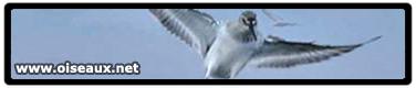 Le site oiseaux.net